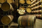 Around the World Pinot Encircled in Santa Maria by Au Bon Climat barrels
